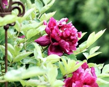 {TYPISCH FÜR} ... meine Blumen